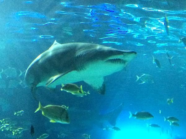 Ripley's Aquarium Toronto August 2015